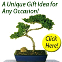Bonsai Boy of New York Cashback